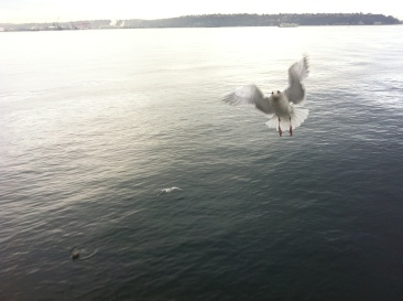 anniversary_view seagull