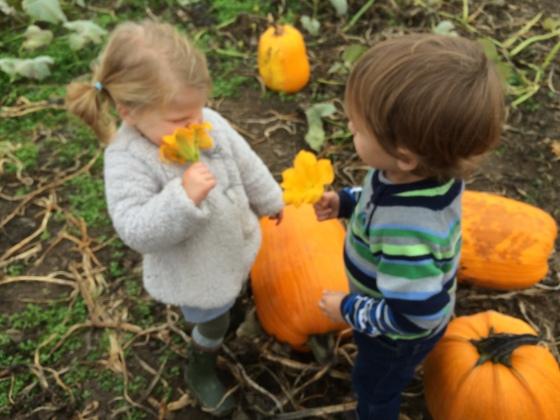pumpkin duece flower