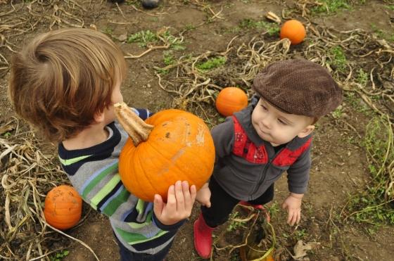 pumpkin duece10